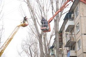 В Астрахани продолжаются работы по опиловке деревьев