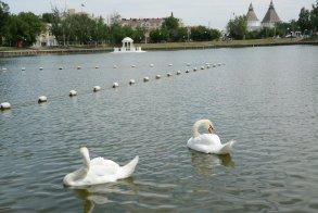Лебединое озеро ждут большие перемены